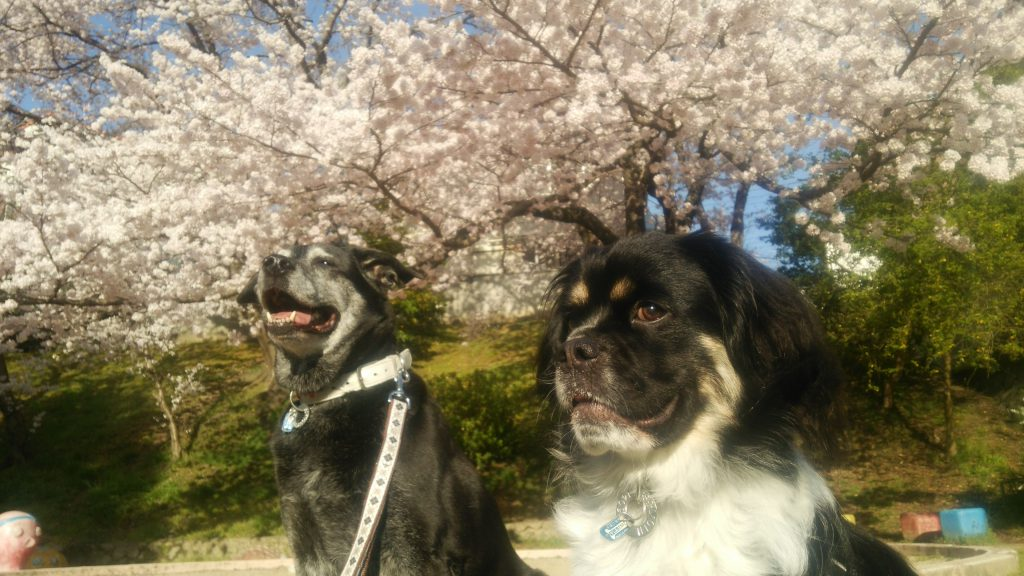 笹子と蘭丸
