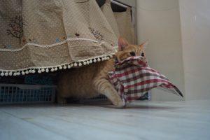 盗人、保護猫おみくん