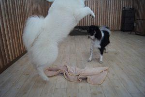 犬の預かり