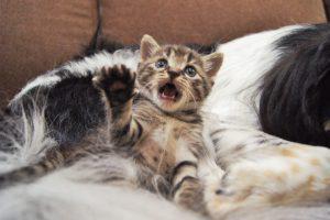 ペットシッター、ペットホテル、デイサービス(老犬介護)を行うはまじぃの家のアニマルスタッフ「蘭丸くん」と保護猫みるくちゃんの画像8