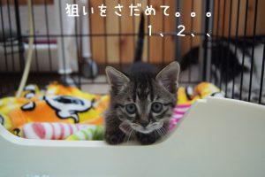 2016.11.4すたっふブログ12