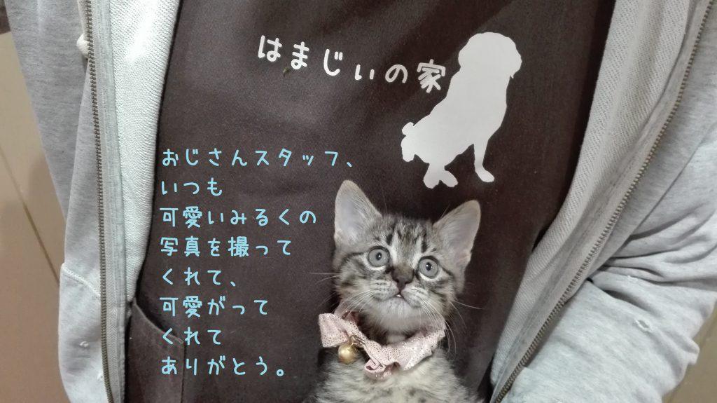 2016.11.4すたっふブログ3