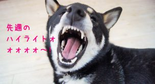 兵庫県川西市にあるはまじぃの家では兵庫県、大阪府、京都府へペットホテルやデイサービスをご利用のお客様(ペット)をお迎えに行かせていただきます(ペットタクシー)。そんなはまじぃの家での店内の様子。タイトル