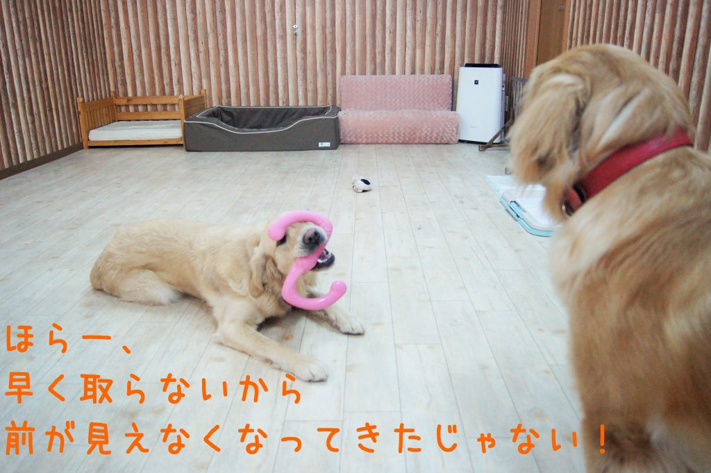 兵庫県川西市のはまじぃの家では「ケージに入れないペットホテル」として犬や猫の宿泊を承っております。24時間スタッフが付いてお世話します!そんなホテルやデイサービスの様子をご紹介。41