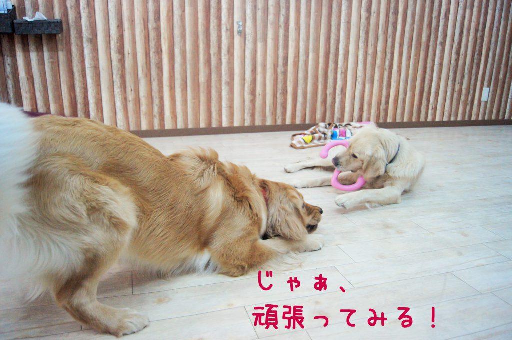 兵庫県川西市のはまじぃの家では「ケージに入れないペットホテル」として犬や猫の宿泊を承っております。24時間スタッフが付いてお世話します!そんなホテルやデイサービスの様子をご紹介。46