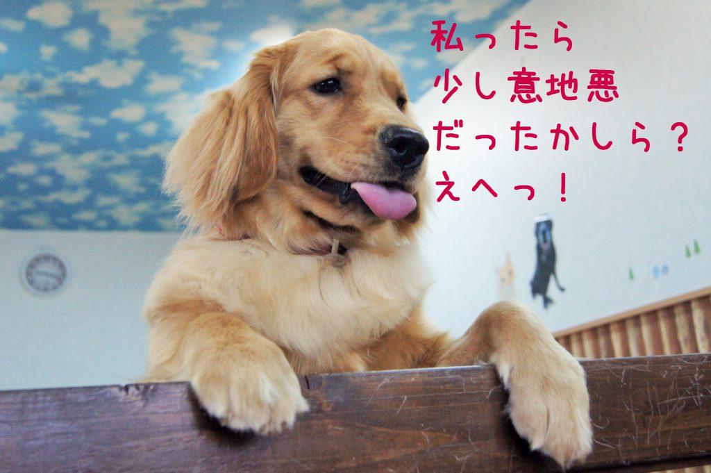 兵庫県川西市のはまじぃの家では「ケージに入れないペットホテル」として犬や猫の宿泊を承っております。24時間スタッフが付いてお世話します!そんなホテルやデイサービスの様子をご紹介。58